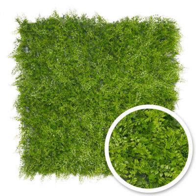 Mur végétal Fougère : 1m x 1m