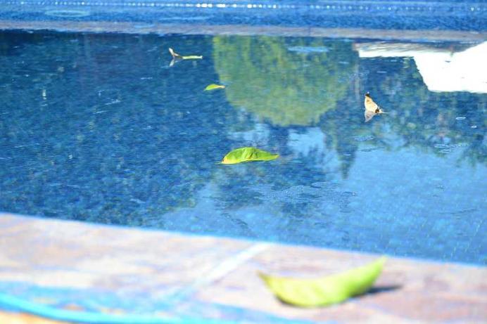 bache piscine anti feuilles et insectes 4